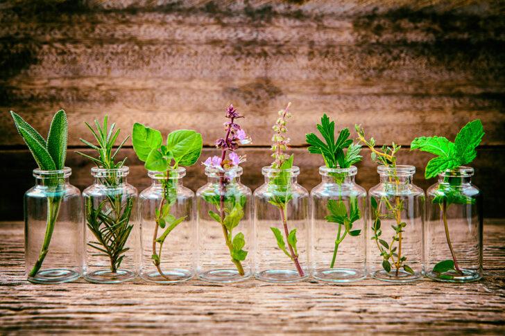 Medium Size of Küchenkräutergarten Pepp Deinen Sommer Mit Einem Krutergarten Auf Wohnzimmer Küchenkräutergarten
