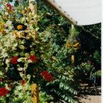 Sonnenschutz Im Garten Wohnzimmer Sonnenschutz Im Garten Sonnensegel Pergola Shop Decke Bad Holzbank Kugelleuchte Wohnzimmer Deko Badezimmer Hochschrank Spielhäuser Sitzbank Schlafzimmer