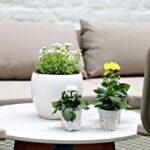 Komfort Gartensofa Tchibo 2 In 1 Eine Gemtliche Gartenlounge Im Hof Zum Wohlfhlen Und Entspannen Wohnzimmer Gartensofa Tchibo