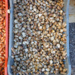 Kisten Küche Wohnzimmer Kisten Küche Kleine Lebendig Essbare Schnecken In Der Kiste Franzsische Kche Ebay Einbauküche Led Panel Landhaus Tapete Modern Schreinerküche Billige