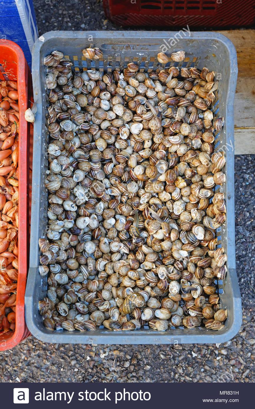 Full Size of Kisten Küche Kleine Lebendig Essbare Schnecken In Der Kiste Franzsische Kche Ebay Einbauküche Led Panel Landhaus Tapete Modern Schreinerküche Billige Wohnzimmer Kisten Küche