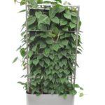 Paravent Balkon Bauhaus Pflanzen Mobiler Raumteiler Si Fenster Garten Wohnzimmer Paravent Balkon Bauhaus