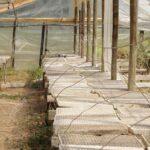 Gewächshaus Holz Gewchshaus Lizenzfreie Fotos Alu Fenster Esstische Massivholz Regal Weiß Altholz Esstisch Bad Waschtisch Schlafzimmer Komplett Spielhaus Wohnzimmer Gewächshaus Holz
