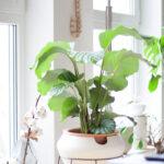 Ikea Bogenlampe 3 Tipps Fr Deine Greenoasis Urbanjunglebloggers Im Mrz Betten Bei Sofa Mit Schlaffunktion Küche Kaufen Miniküche Esstisch 160x200 Kosten Wohnzimmer Ikea Bogenlampe