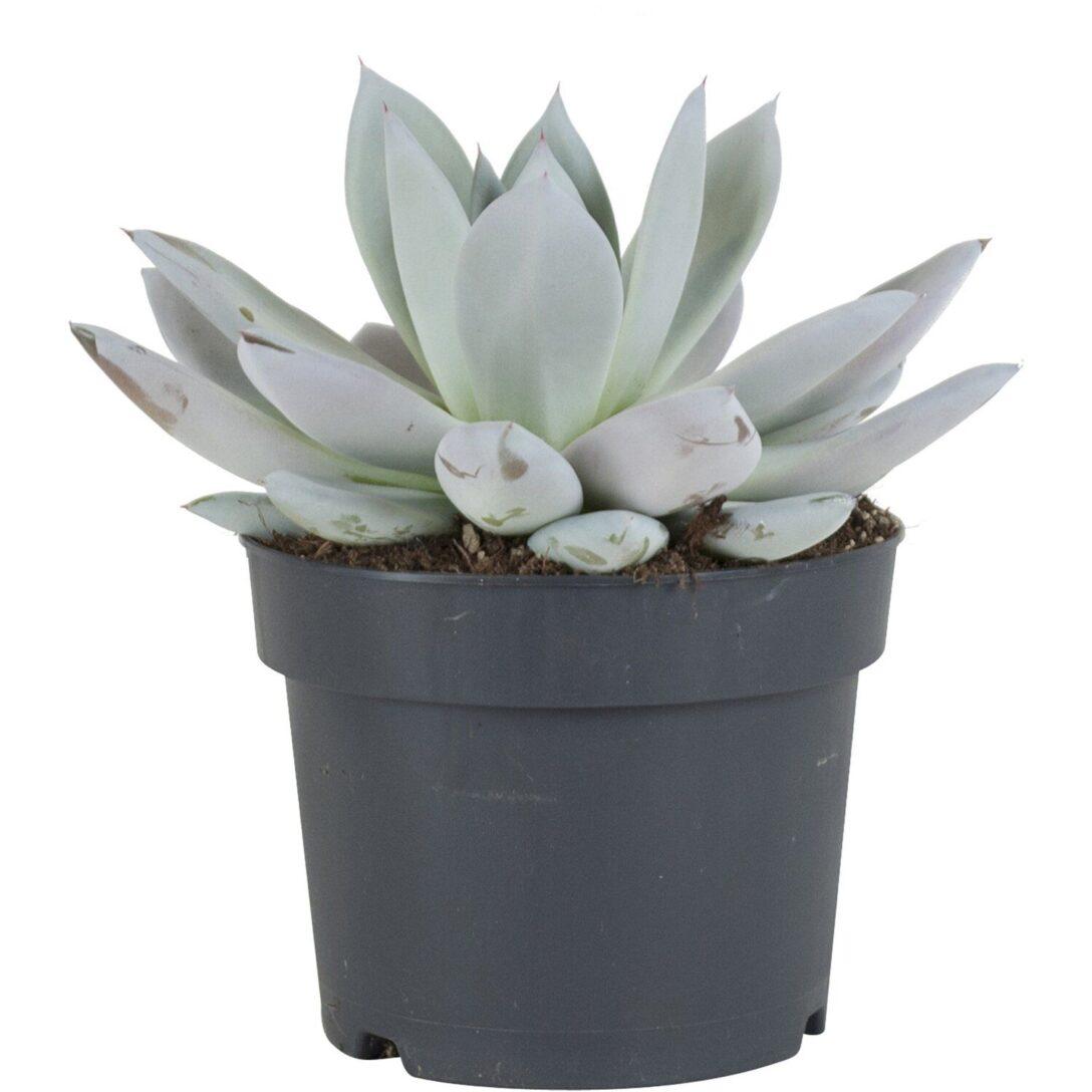 Large Size of Küchenabfalleimer Und Pflanzenhaut Dunkelgrau Cohosy Push Top Trash Aufhngbarer Wohnzimmer Küchenabfalleimer