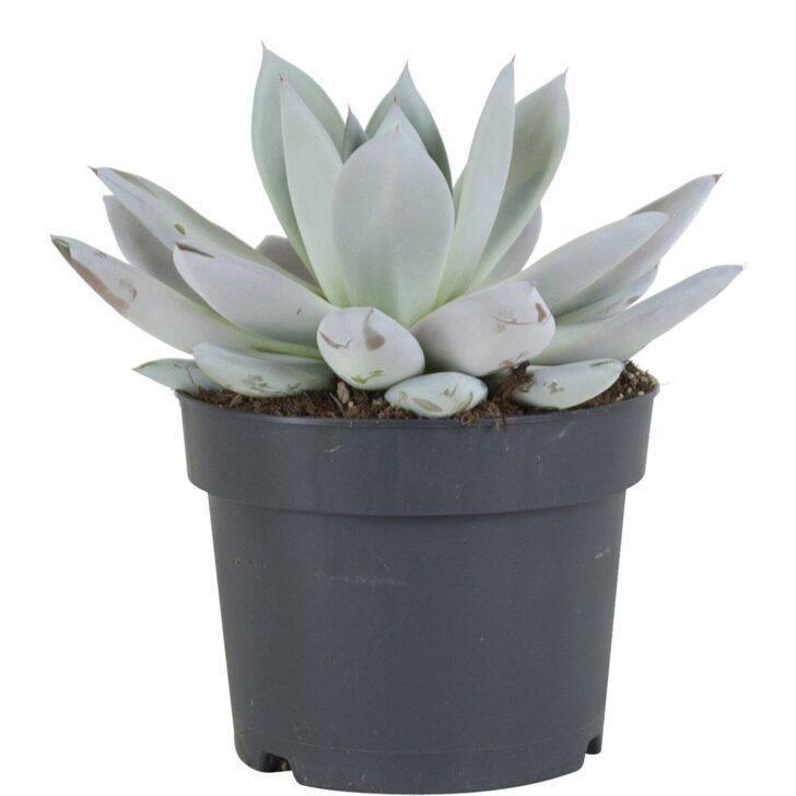 Medium Size of Küchenabfalleimer Und Pflanzenhaut Dunkelgrau Cohosy Push Top Trash Aufhngbarer Wohnzimmer Küchenabfalleimer