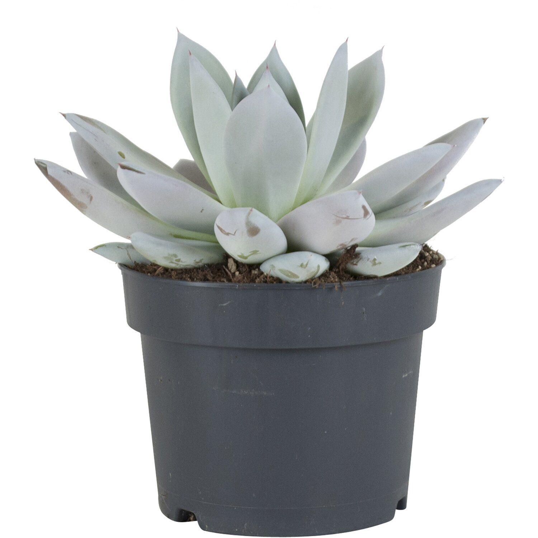 Full Size of Küchenabfalleimer Und Pflanzenhaut Dunkelgrau Cohosy Push Top Trash Aufhngbarer Wohnzimmer Küchenabfalleimer