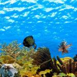 Glasbild 120x50 Wohnzimmer Glasbild 120x50 Premium Unterwasser 120 50 Cm Ebay Glasbilder Küche Bad
