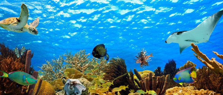 Medium Size of Glasbild 120x50 Premium Unterwasser 120 50 Cm Ebay Glasbilder Küche Bad Wohnzimmer Glasbild 120x50