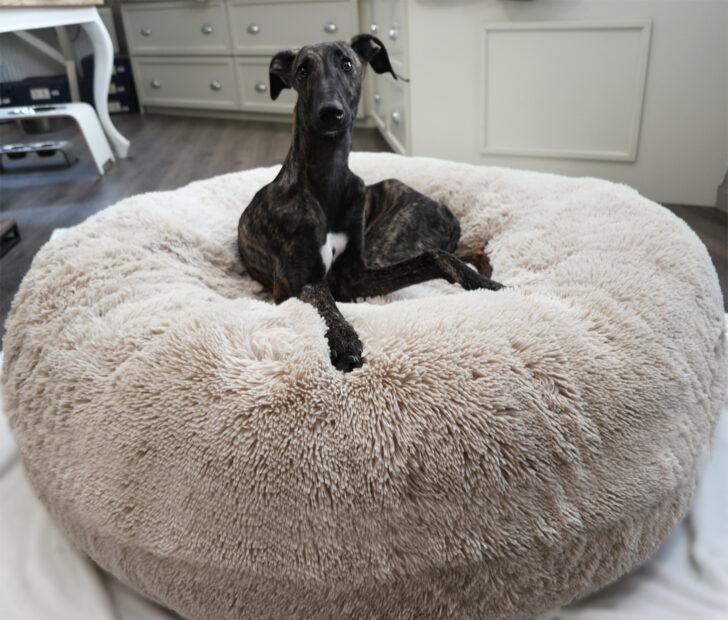 Medium Size of Hundebett Wolke 125 Dogs Inn Hundeshop Cosybed Air Longhair Sand N E U Wohnzimmer Hundebett Wolke 125