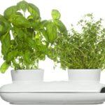 Sagaform Herbs Spices Krutertopf Keramik Waschbecken Küche Kräutertopf Wohnzimmer Kräutertopf Keramik