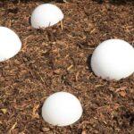 Solarkugeln Aldi Solar Kugelleuchte Hornbach Relaxsessel Garten Wohnzimmer Solarkugeln Aldi