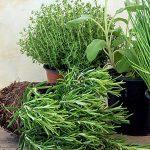 Einen Krutergarten Anlegen Simply Vde V Wohnzimmer Kräutertöpfe
