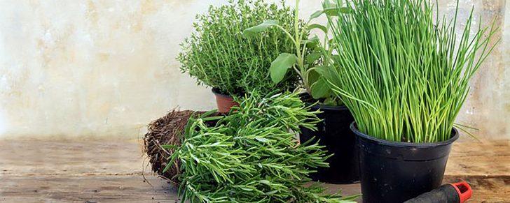 Medium Size of Einen Krutergarten Anlegen Simply Vde V Wohnzimmer Kräutertöpfe