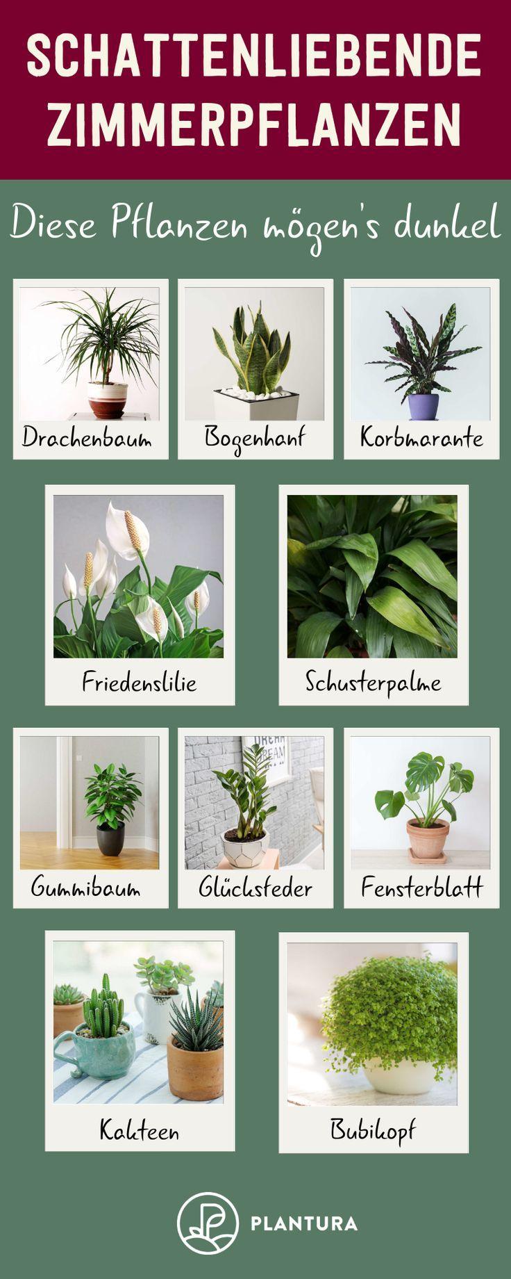 Full Size of Küchenkräutergarten Pin Von Evelyn Wolf Auf Einrichten In 2020 Pflanzen Zimmer Wohnzimmer Küchenkräutergarten
