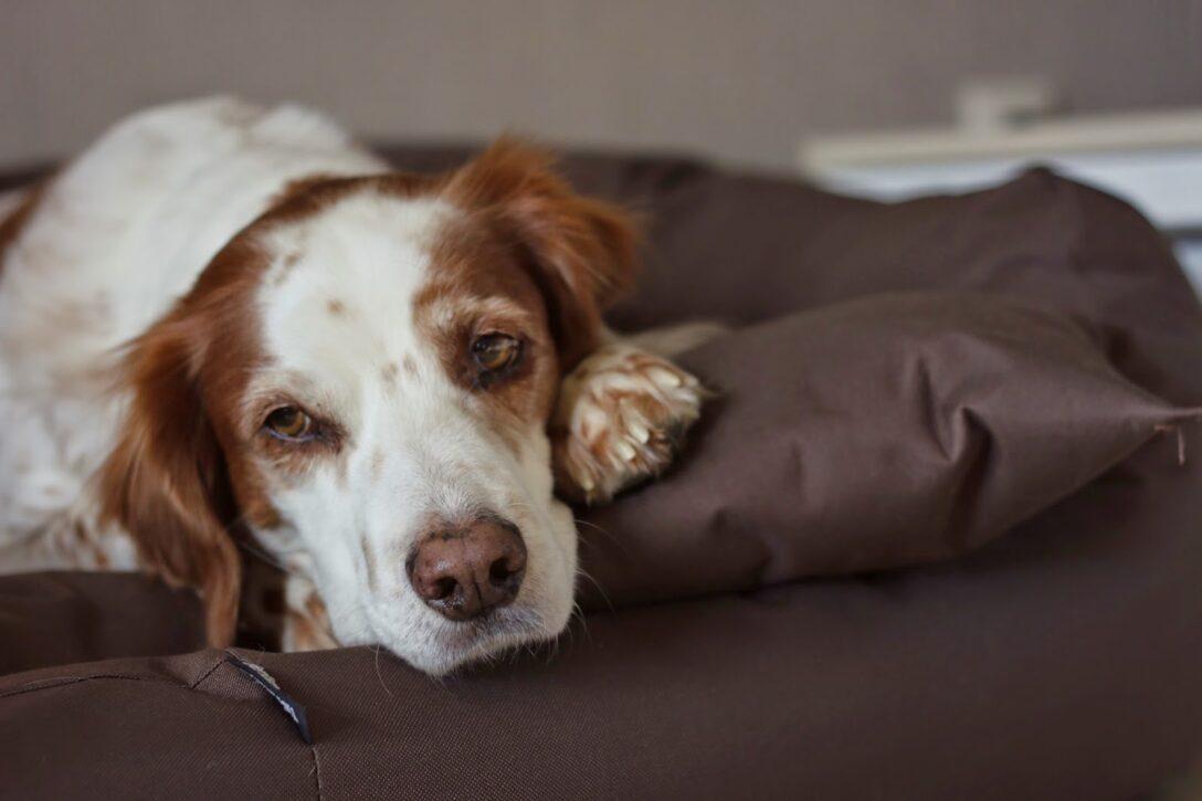 Hundeblog Fressen Regal 25 Cm Breit Bett 120 40 80 Hoch 60 Tief Tiefe 30 20 50 Sofa Sitzhöhe 55 Liegehöhe