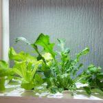Küchenkräutergarten Krutergarten Indoor Mit Frischen Bio Krutern Das Ganze Jahr Ber Wohnzimmer Küchenkräutergarten