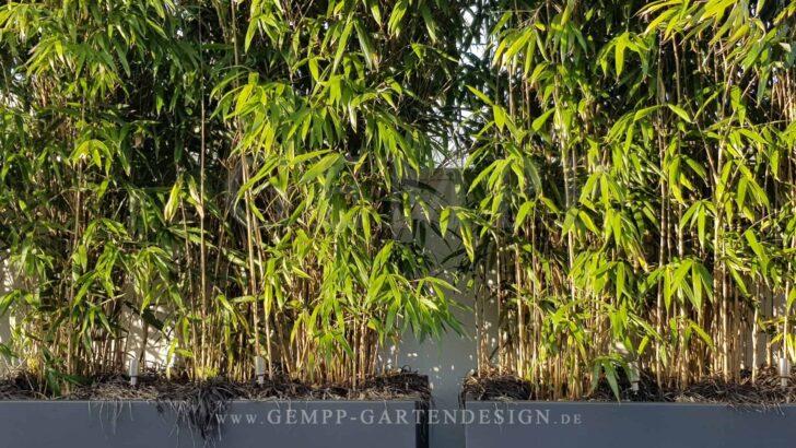 Medium Size of Pflanzen Sichtschutz Garten Bambus Als Im Gempp Gartendesign Fenster Feuerstelle Loungemöbel Holz Kugelleuchten Skulpturen Brunnen Lounge Sessel Wohnzimmer Pflanzen Sichtschutz Garten
