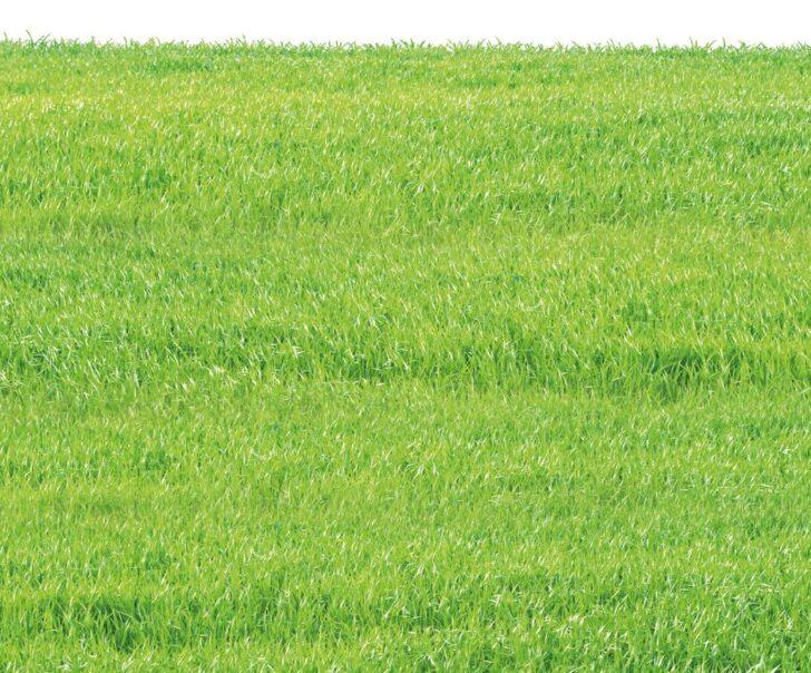 Medium Size of Grnbelag Entferner Zur Entfernung Von Algen Auf Terrassen Schlafzimmer Set Sichtschutz Garten Wpc Ligne Roset Sofa Günstig Dusche Komplett Weiß Lounge Wohnzimmer Wpc Sichtschutzzaun Set Aldi