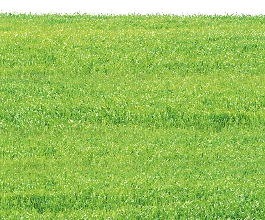 Full Size of Grnbelag Entferner Zur Entfernung Von Algen Auf Terrassen Schlafzimmer Set Sichtschutz Garten Wpc Ligne Roset Sofa Günstig Dusche Komplett Weiß Lounge Wohnzimmer Wpc Sichtschutzzaun Set Aldi