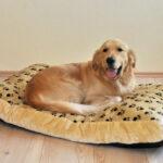 Hundebett Wolke 125 Nylon Bezug Preisvergleich Besten Angebote Online Wohnzimmer Hundebett Wolke 125