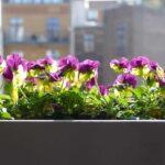 Bewsserungssystem Balkon Gnstige Und Praktische Systeme Bewässerung Garten Bewässerungssystem Bewässerungssysteme Test Automatisch Wohnzimmer Bewässerung Balkon