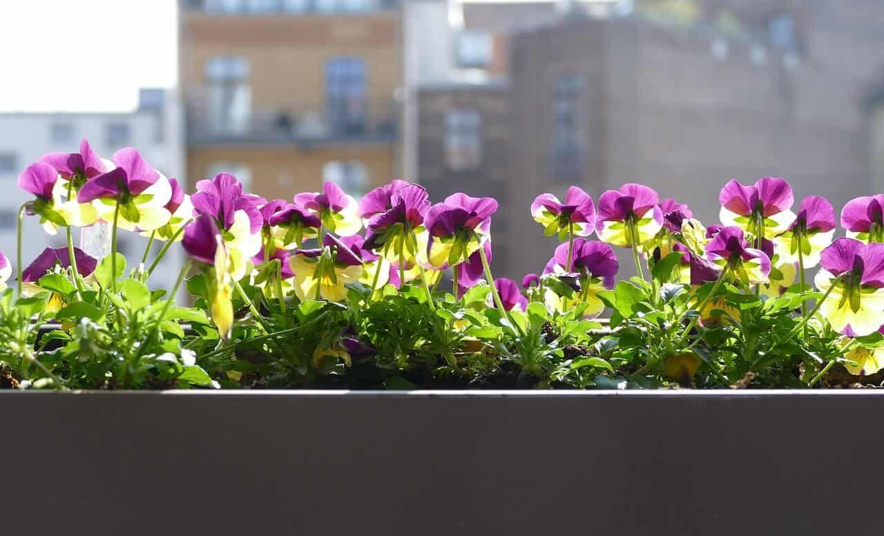 Full Size of Bewsserungssystem Balkon Gnstige Und Praktische Systeme Bewässerung Garten Bewässerungssystem Bewässerungssysteme Test Automatisch Wohnzimmer Bewässerung Balkon