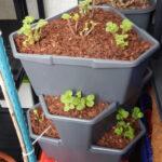 Paul Potato Kartoffelturm Erfahrungen Erdbeeren Im 2 Mein Nasch Balkon Wohnzimmer Paul Potato Kartoffelturm Erfahrungen