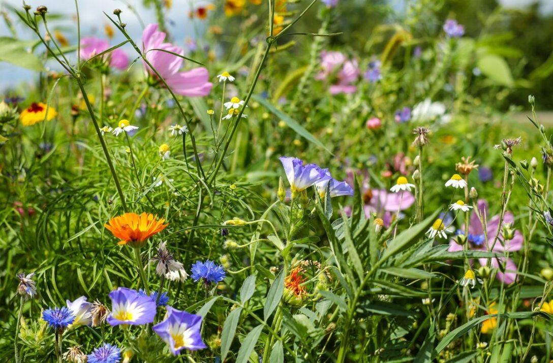 Bewässerung Balkon Con Nectde Calenberger Online News Expertentipps Richtige Bewässerungssysteme Garten Test Bewässerungssystem Automatisch