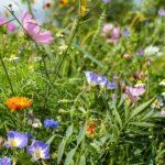 Bewässerung Balkon Con Nectde Calenberger Online News Expertentipps Richtige Bewässerungssysteme Garten Test Bewässerungssystem Automatisch Wohnzimmer Bewässerung Balkon