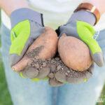 Paul Potato Kartoffelturm Erfahrungen Wohnzimmer Paul Potato Kartoffelturm Erfahrungen