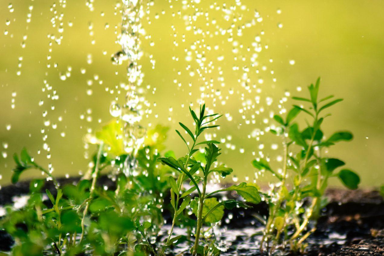 Full Size of Bewässerung Balkon Tropfbewsserung Entspannt Wasserlassen Guardi Blog Garten Bewässerungssystem Bewässerungssysteme Automatisch Test Wohnzimmer Bewässerung Balkon