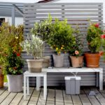 Bewässerung Balkon Bewsserung Aber Mit System Willkommen In Franks Kleinem Garten Bewässerungssysteme Bewässerungssystem Test Automatisch Wohnzimmer Bewässerung Balkon