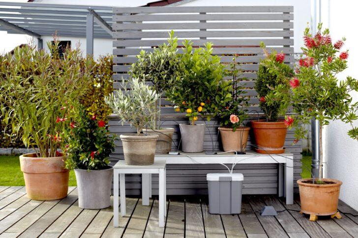 Medium Size of Bewässerung Balkon Bewsserung Aber Mit System Willkommen In Franks Kleinem Garten Bewässerungssysteme Bewässerungssystem Test Automatisch Wohnzimmer Bewässerung Balkon