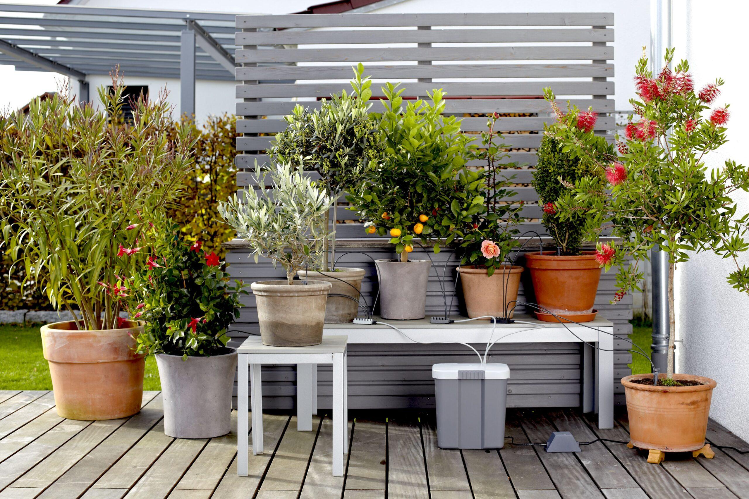 Full Size of Bewässerung Balkon Bewsserung Aber Mit System Willkommen In Franks Kleinem Garten Bewässerungssysteme Bewässerungssystem Test Automatisch Wohnzimmer Bewässerung Balkon