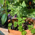 Thumbnail Size of Bewässerung Balkon Pflanzen Auf Terrasse Automatisiert Mit Apple Homekit Bewssern Garten Automatisch Bewässerungssysteme Test Bewässerungssystem Wohnzimmer Bewässerung Balkon