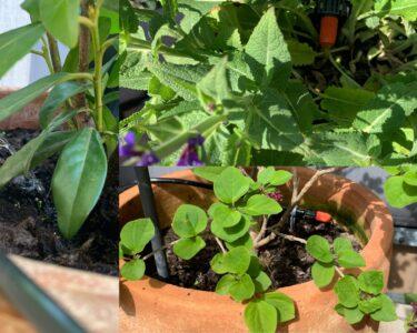 Bewässerung Balkon Wohnzimmer Bewässerung Balkon Pflanzen Auf Terrasse Automatisiert Mit Apple Homekit Bewssern Garten Automatisch Bewässerungssysteme Test Bewässerungssystem