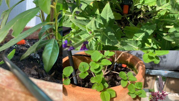 Medium Size of Bewässerung Balkon Pflanzen Auf Terrasse Automatisiert Mit Apple Homekit Bewssern Garten Automatisch Bewässerungssysteme Test Bewässerungssystem Wohnzimmer Bewässerung Balkon