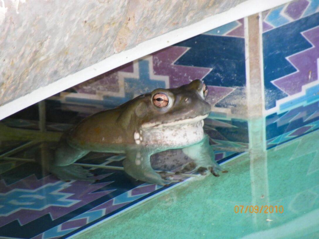 Large Size of Sofa Lulu Bullfrog Preis Shutterbugs Share Their Shots Local News Wohnzimmer Bullfrog Lulu