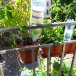 Erfahrungsbericht Bewsserung Mit Aufstzen Fr Pet Flaschen Bewässerung Garten Bewässerungssysteme Test Automatisch Bewässerungssystem Wohnzimmer Bewässerung Balkon