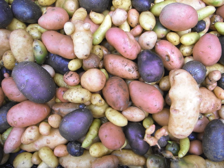 Full Size of Paul Potato Kartoffelturm Erfahrungen Von Ella Der Haide Ist Eine Reise Zu Sieben Gemeinschaftsgrten Wohnzimmer Paul Potato Kartoffelturm Erfahrungen
