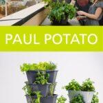 Paul Potato Kartoffelturm Erfahrungen Pin Von Elisabeth La Boulangre Auf Garten In 2020 Wohnzimmer Paul Potato Kartoffelturm Erfahrungen