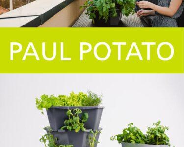 Paul Potato Kartoffelturm Erfahrungen Wohnzimmer Paul Potato Kartoffelturm Erfahrungen Pin Von Elisabeth La Boulangre Auf Garten In 2020