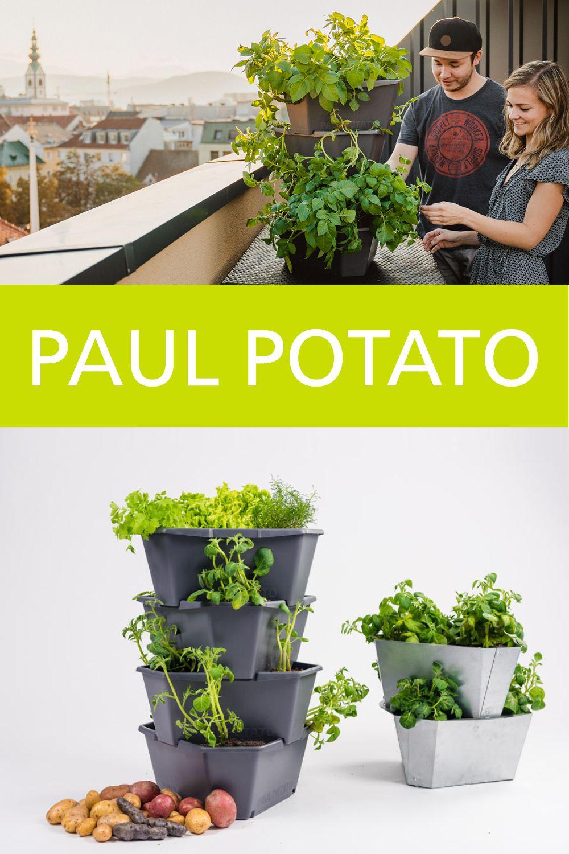 Full Size of Paul Potato Kartoffelturm Erfahrungen Pin Von Elisabeth La Boulangre Auf Garten In 2020 Wohnzimmer Paul Potato Kartoffelturm Erfahrungen