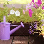 Bewässerung Balkon Bewsserung Blumen Im Lizenzfreie Fotos Garten Automatisch Bewässerungssysteme Test Bewässerungssystem Wohnzimmer Bewässerung Balkon
