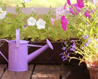 Bewässerung Balkon Wohnzimmer Bewässerung Balkon Bewsserung Blumen Im Lizenzfreie Fotos Garten Automatisch Bewässerungssysteme Test Bewässerungssystem