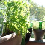 Bewässerung Balkon Blumen Und Pflanzen Automatisch Bewssern Eat Smarter Garten Bewässerungssysteme Bewässerungssystem Test Wohnzimmer Bewässerung Balkon