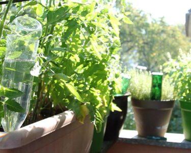Bewässerung Balkon Wohnzimmer Bewässerung Balkon Blumen Und Pflanzen Automatisch Bewssern Eat Smarter Garten Bewässerungssysteme Bewässerungssystem Test