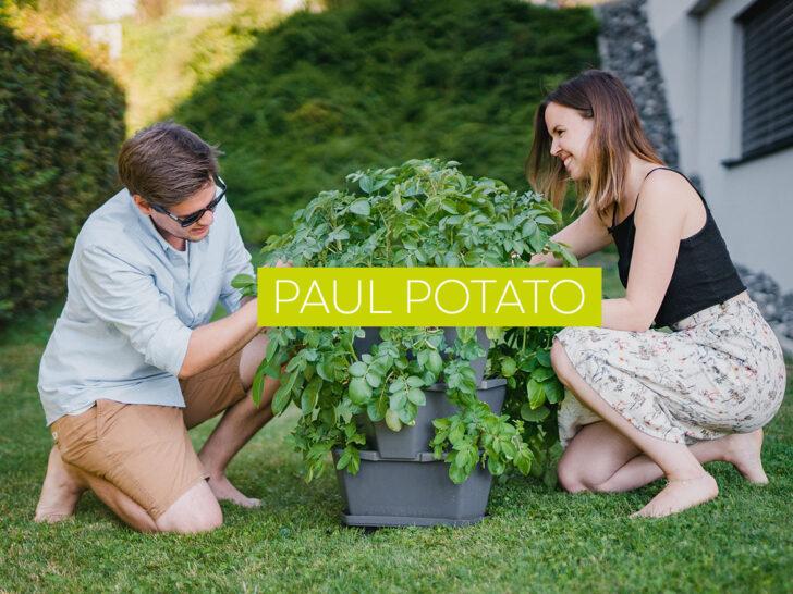 Medium Size of Paul Potato Kartoffelturm Erfahrungen Der Weltweit Erste Gusta Garden Wohnzimmer Paul Potato Kartoffelturm Erfahrungen
