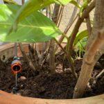 Bewässerung Balkon Pflanzen Auf Terrasse Automatisiert Mit Apple Homekit Bewssern Garten Bewässerungssystem Bewässerungssysteme Automatisch Test Wohnzimmer Bewässerung Balkon